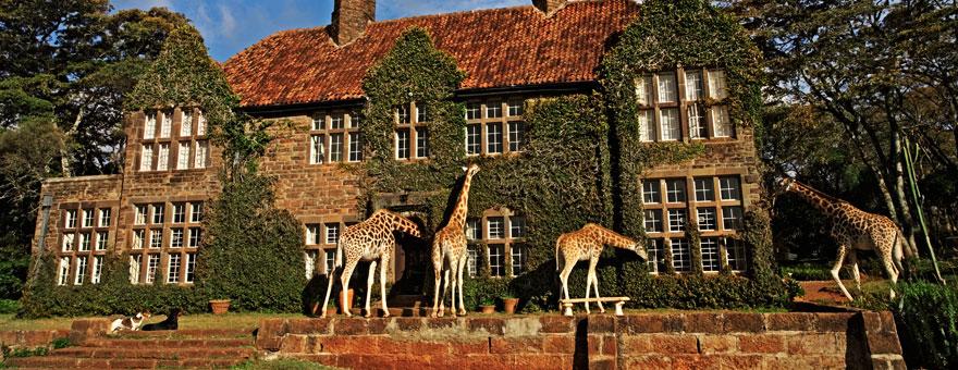 отель с жирафами - 1