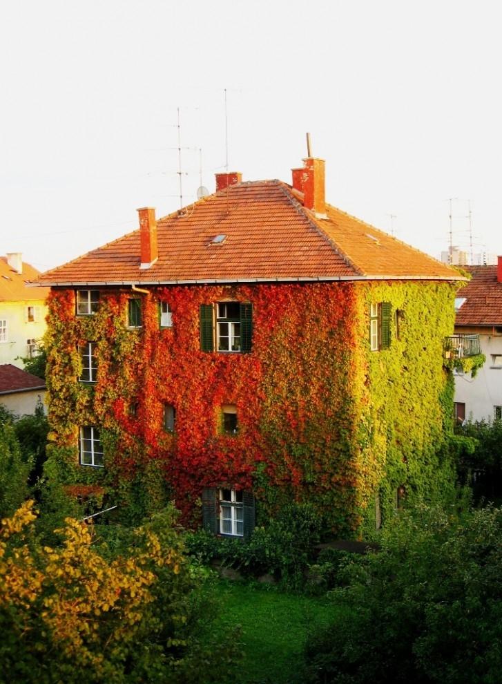 Осень - домик в цветах - вертикальный снимок
