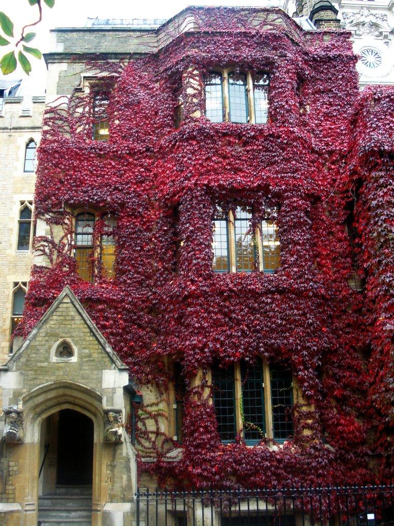 Осень - дом в красных листьях - вертикальный