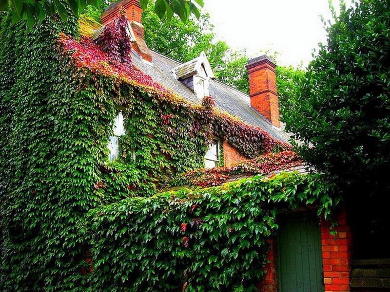 Осень - дом в ярких цветах