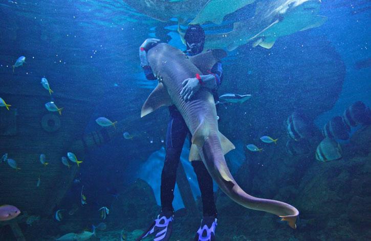 акула и человек