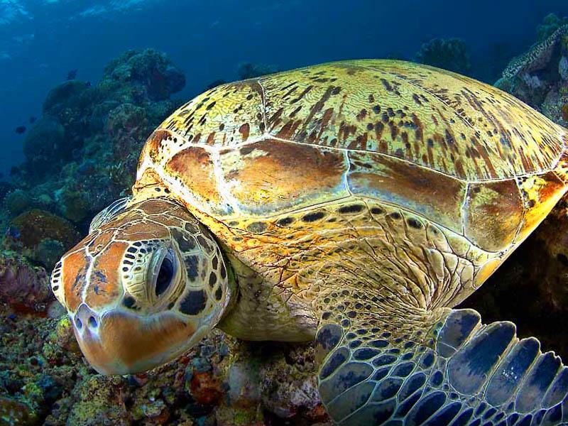 Фото: http://www.realborneo.ru/images/diving_tours/sipadan05_b.jpg