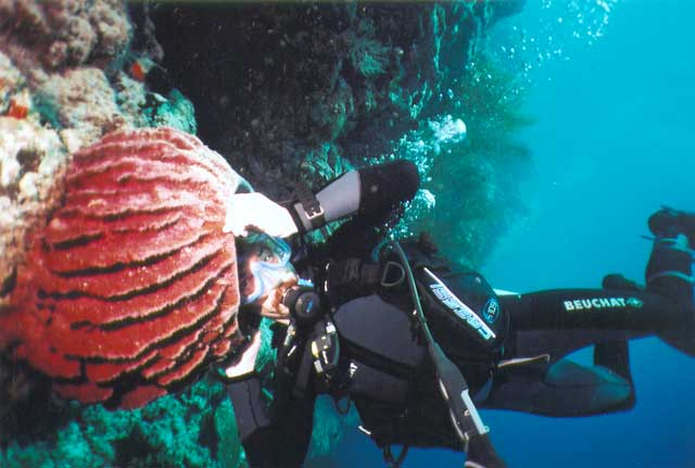 Фото: http://www.visit50.com/wp-content/uploads/2011/04/Borneo-Diving-007.jpg