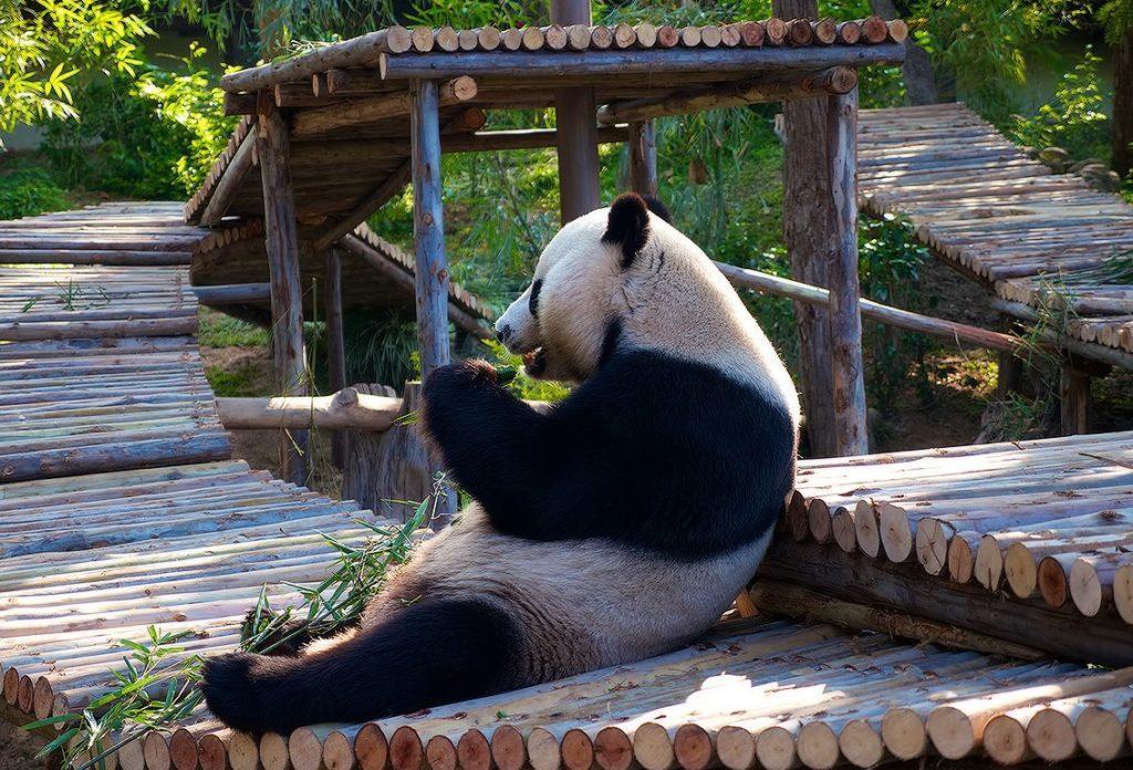 panda-zoopark